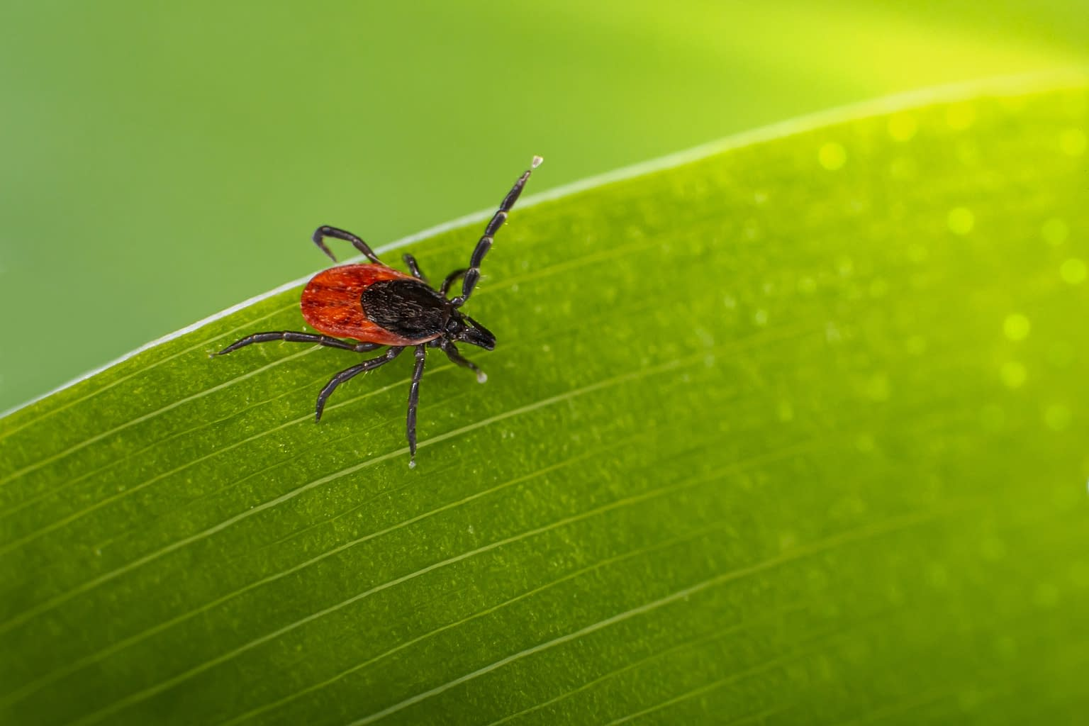 tick control services to residential customers throughout New Haven, Fairfield County and Hartford Counties.